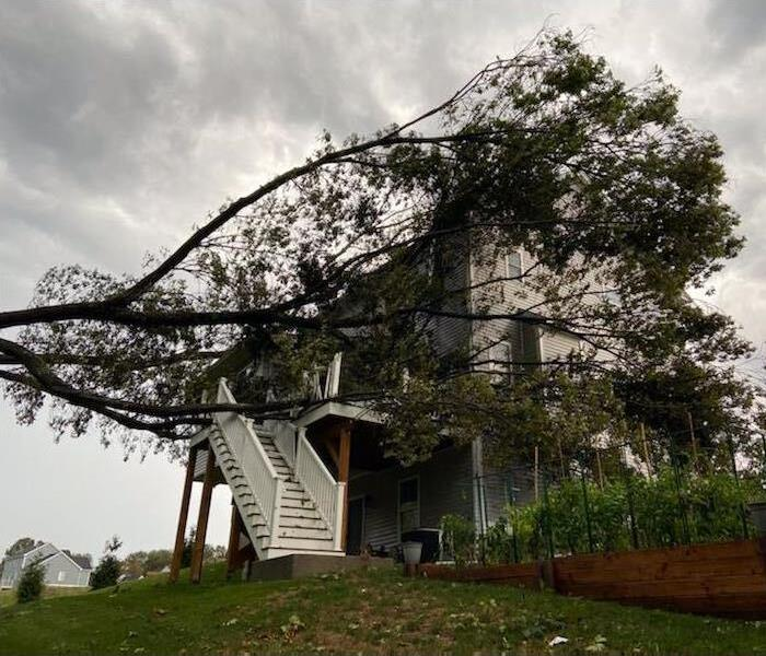 photo of a large fallen tree on top of a house in an open field